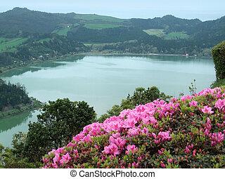lakeside scenery at lagoa das sete cidades - detail of a...