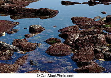 Rocks covered with red seaweed - Zoom on rocks covered with...