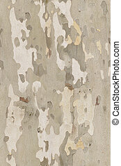 Platan bark texture that perfectly loop horizontally and vertically