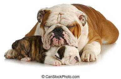 Bulldog, padre, hija