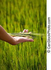 plénitude, symbolique, fertilité, santé, suggérer, geste