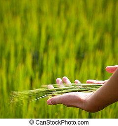 symbolique, geste, suggérer, fertilité, plénitude, santé