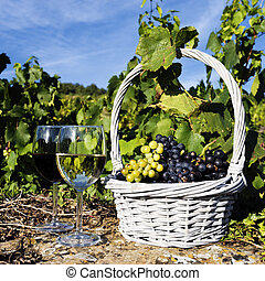 red and white wine - glasses of white and red wine and...
