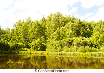 Lake and forest. View of the lake near the forest in summer.
