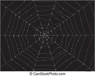 Spider web - spiderweb with dew drops on it