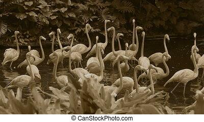 Slow motion flamingos retro style - Stylized flamingo lake...
