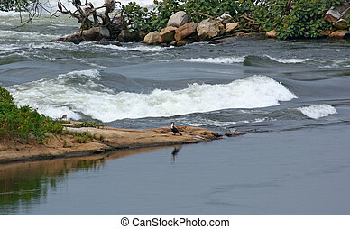River Nile closeup near Jinja - waterside scenery showing a...