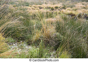 morass - detail of a swamp in Southern Germany at autumn...