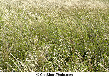 high grassland background - natural background with long...