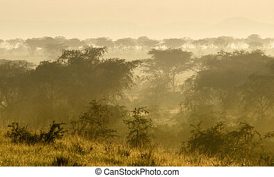 Queen Elizabeth National Park at evening time - dusty...