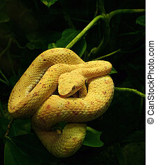 yellow snake in green vegetation - convolute yellow snake...