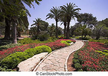 Park in the early spring - Midday in tropical park in the...