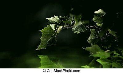 Green leaves over glowing water