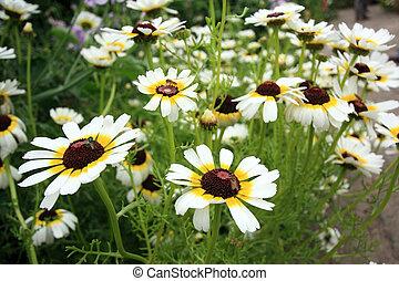 blanco, flores, jardín