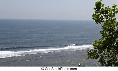 Tree over ocean - A green tree and view of blue ocean on...