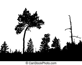 silhouette of the crooked pine in