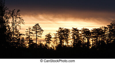 Beautiful forest silhouette in the morning licht