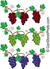 Grape and Vine illustration