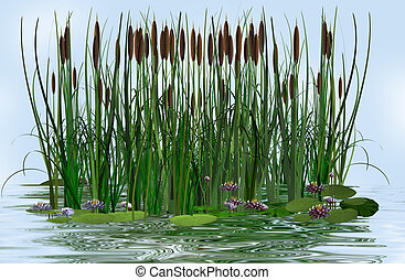 water lily and rush in a water lake illustration