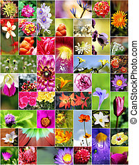 Flowers - Collage of flowers in different shapes, colors and...