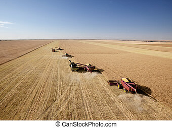 Four Combines in Field - Four harvesters combining in...
