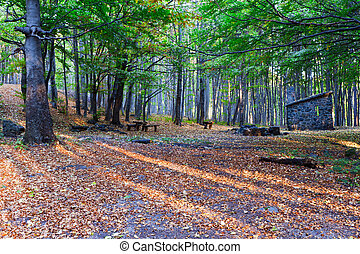 Shelter of the forest in autumn
