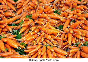 Winter carrots by the bunch