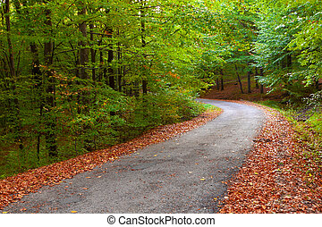 Beautiful autumn forest, winding road in it.