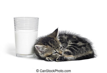 kitten besides a glass of milk - Studio photography of a...