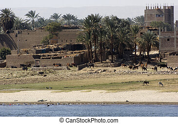 waterside Nile scenery in Egypt - waterside River Nile...