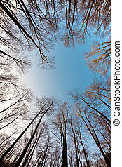 crown of trees with clear blue sky and harmonic branch...