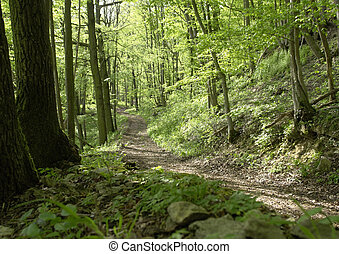 forest track un sunny ambiance