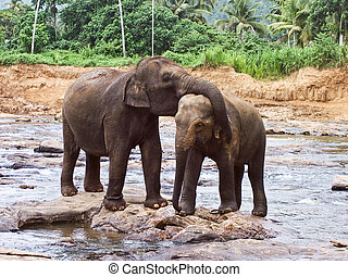 hugging elefants in the river