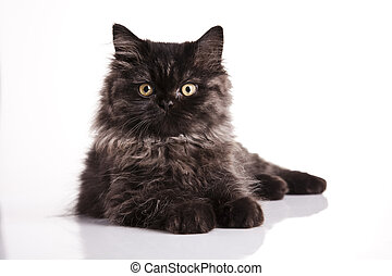 Happy cat - Cat - the small furry animal with four legs and...
