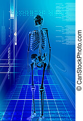 human skeleton - Digital illustration of human skeleton in...