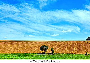 landscape with row of trees in a farming area under blue sky