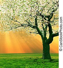 Spring scenery