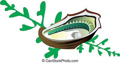 vector-oyster, alga - oyster, algua, white, background