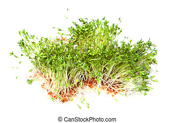 Cress sprouts - Green garden cress sprouts for a healthy...