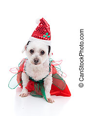 Puppy dog wearing a red and green dress