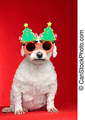 Christmas dog wearing glasses - A small white pet dog...