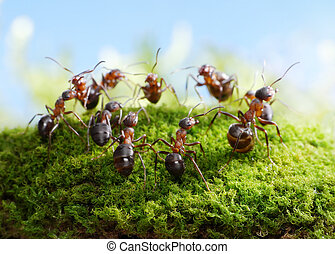 team of ants, dance of hunters - team of ants formica rufa,...