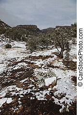 Winter Canyon - Beautiful snowy canyon with juniper and...