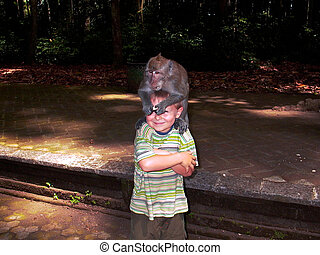 monkeys attacking children in the monkey forest to get food