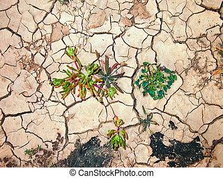 detail of dry loam earth - earth is cracked by heat and...