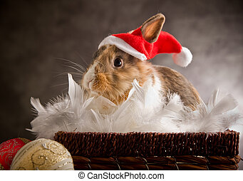 Dwarf Rabbit wearing a Santa Claus Costume - photo of...