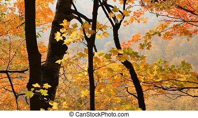 Autumn valley.