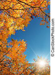 Autumn leaf in sky. Nature composition.