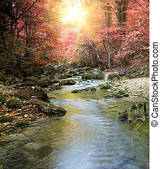 River in autumn forest Nature composition