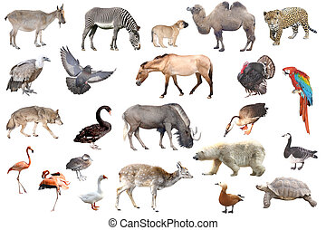 animals - Collection of wild animals